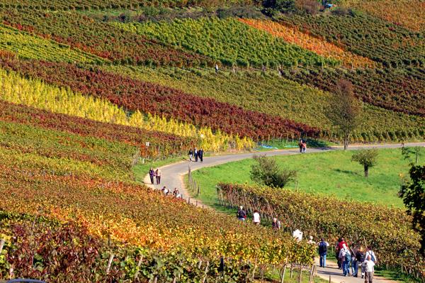 Wandern im Ahrtal: Rotweinwanderweg und AhrSteig erwandern – Ahrtal genießen!